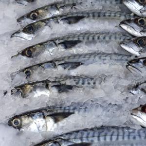 caballa-pescados-orol-burela