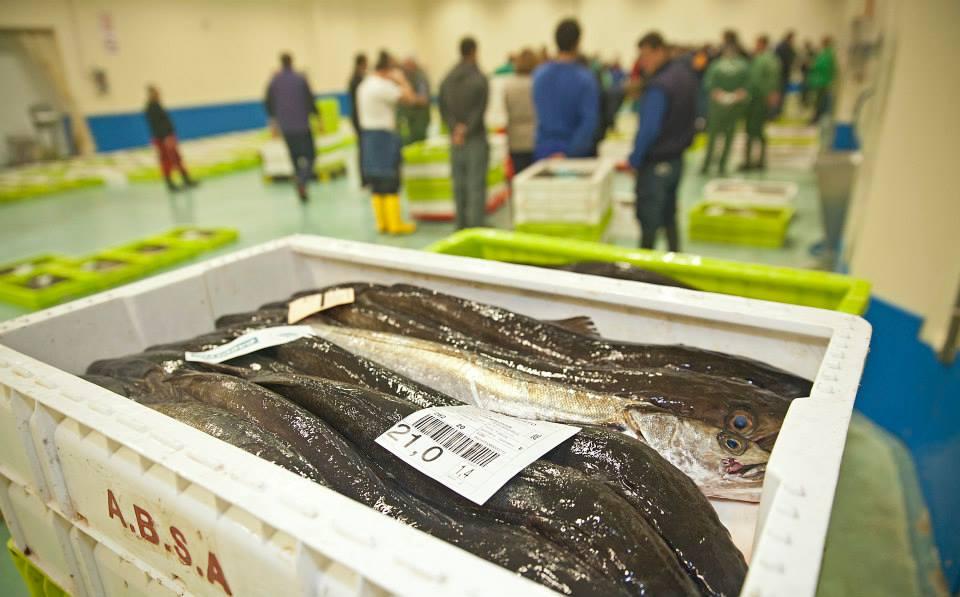 merluza-pescados-orol-burela